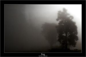 Fog. by pleautaud