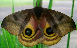 Moth 3 STOCK by Penny-Stock