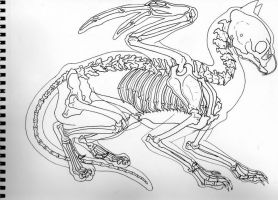 Gryphon Skeleton by SilverGryphon8