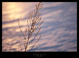 Breeze by Mr808