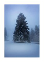 Winter Wonderland - Part. 9 by Androgynous23