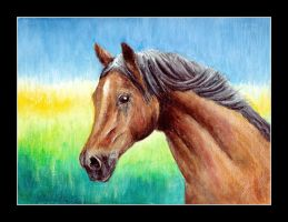 2 oil pastel horse by czajka