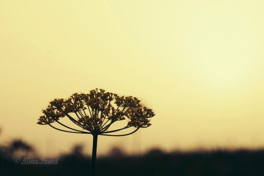 It's almost sunset ! by Drfayed