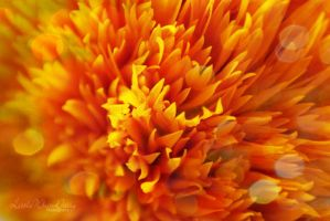 The last flickers of sunflower by little-white-daisy