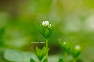 delicate flower by rockmylife