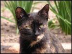 507 by evy-and-cats