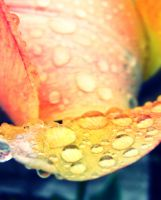 water drops .. by 333Miami333