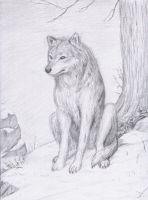 Watching Wolf by dashinvaine