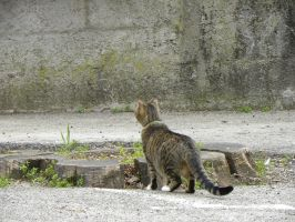 . Chat en balade by Flore-stock