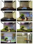 fist try aquascaping - step by step by Alexandra-Bol