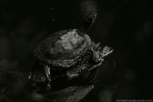 Turtle I by remadance