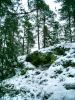 Woods - Snowy - Cloudy 4 by hrimthurs-stock