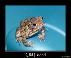 An Old Friend by ewm