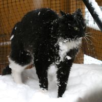 Fun: Crazy Zimba in the snow by lexidh