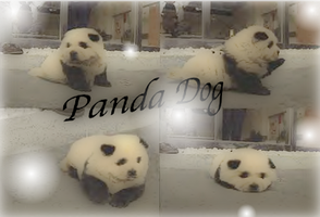 Panda Dog by anime234dotcom