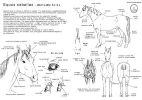 How to draw the horse 1 - Eng by Elruu