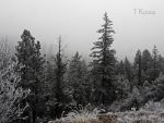 Freezing Fog  by TRunna