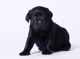 Puppy by Foto-front