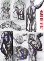 Lesson 3: Arms and Shoulders by Blue13Brush7