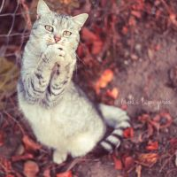 Play with me, pleeaase by Bucikah