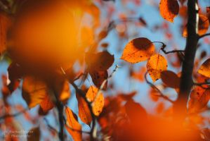 Autumn Leaves 2 by VisualPoems