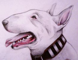 English Bull Terrier by MiDulceLocura