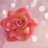 Bokeh rose by FrancescaDelfino