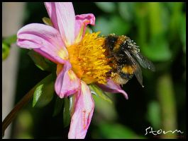 bumble bee v1 by simoner