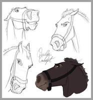 Quiddy Concept Sketches by Wild-Hearts