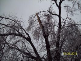 ice storm tree damage by Musicislove12