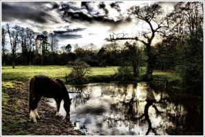 The Wild Horse by lomoboy