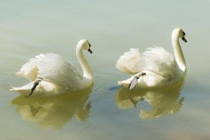 Swan Lake Ballet by Theressa