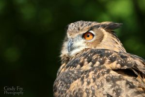 Eagle Owl by lost-nomad07