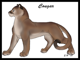 cougar by TussenSessan