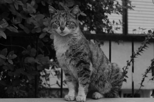 Cat by wolfanger17