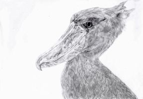 Shoebill Stork by VulturPapa