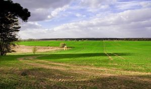 Green Fields by alban-expressed