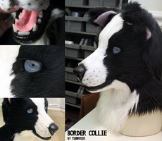 Border Collie Detail by Tsebresos