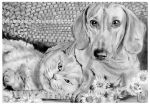 Dog and Cat Drawing by jolabrodnica