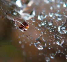 Day 184: The Raindrop Network by Kaz-D