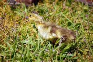 the gosling 9 by photom17