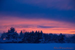 Sunrise Over The Pines by allym007