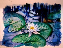 White Water Lily in watercolour by avellajorge