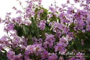 purple flowers by dianapple