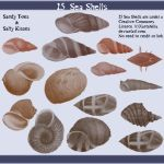 15 Sea Shells by Xantahelia