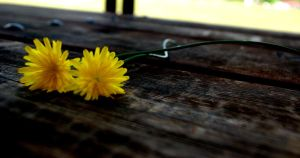 The Colour Yellow by ShutterBug97