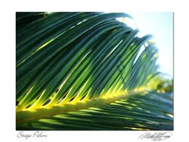 Stago Palm by DistantVisions