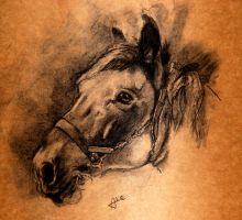 Charcoal Horse by alegreghi