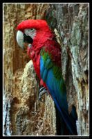 Colorful by Arwen91