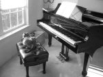 Mozart's Cat by Nomad-1217